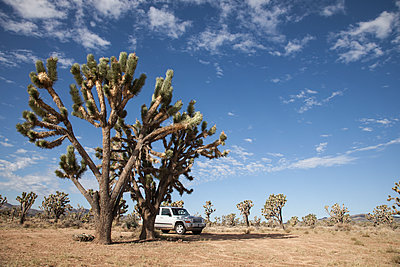 Joshua Tree With Jeep Parked Beneath - p1291m1548112 by Marcus Bastel