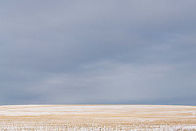 Cornfield and big empty sky - p1335m2082642 by Daniel Cullen