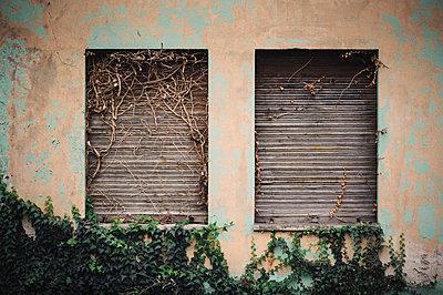 Fensterläden mit Efeu - p1088m902277 von Martin Benner