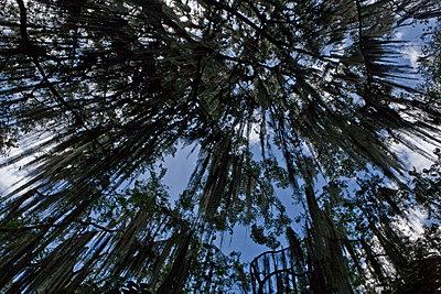 Wald  - p1330m1474872 von Caterina Rancho