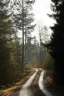 Scandinavian Peninsula, Sweden, Skåne, View of empty dirt track passing through forest - p5755506f by Peter Rutherhagen