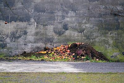 Komposthaufen - p992m791671 von Carmen Spitznagel