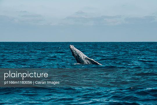 p1166m1183056 von Cavan Images