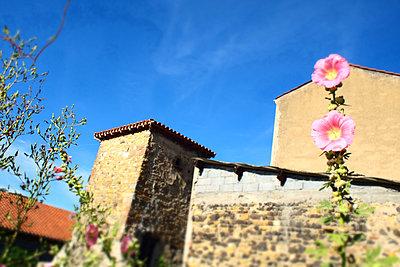 Une belle rose trémière dans un village en Auvergne - p927m2193317 by Florence Delahaye