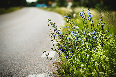 Flowers on the roadside - p972m1136609 by Christian Gustavsson