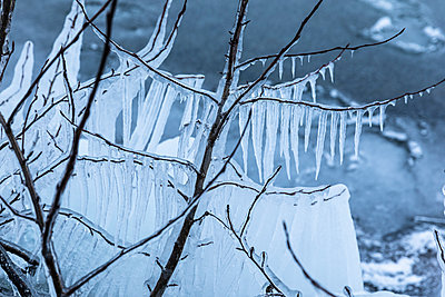 Icicles on branches close to frozen lake - p1687m2278466 by Katja Kircher