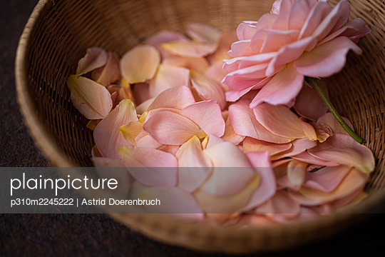 Rose petals - p310m2245222 by Astrid Doerenbruch
