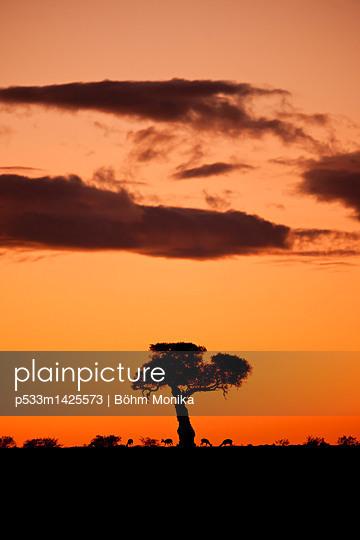 Gazellen vor dem Sonnenaufgang - p533m1425573 von Böhm Monika