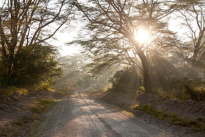 Sunbeams in the Lake Nakuru Nationalpark - p533m1451910 by Böhm Monika