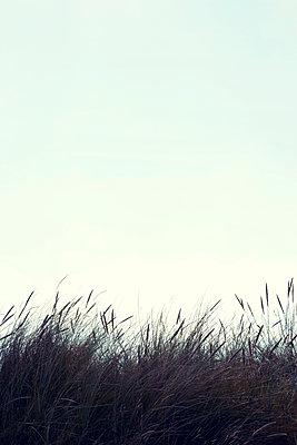 Grasses on the dune - p382m1591160 by Anna Matzen
