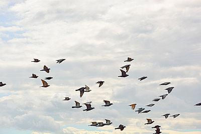 Vogelschwarm - p876m966747 von ganguin