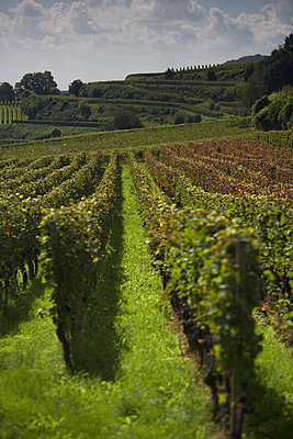 Winery - p1259m1064594 by J.-P. Westermann