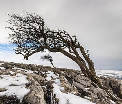 Twistleton Scar End in snow, Ingleton, Yorkshire Dales, Yorkshire, England, United Kingdom, Europe - p871m1167747 by Bill Ward