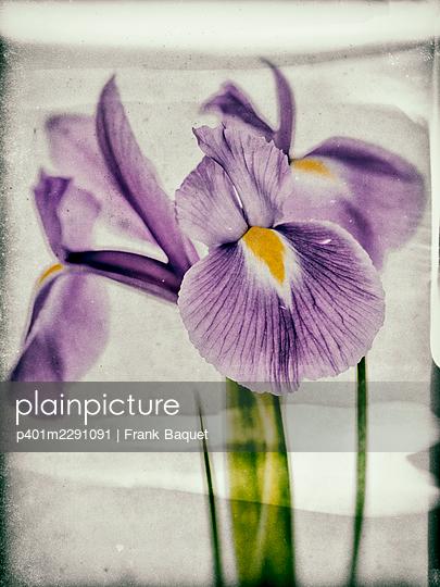 Iris - p401m2291091 by Frank Baquet