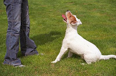 Hund mit Frauchen - p0090217 von Erwin