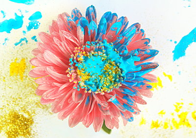Painted flower - p1054m2044831 by Maria Kazvan
