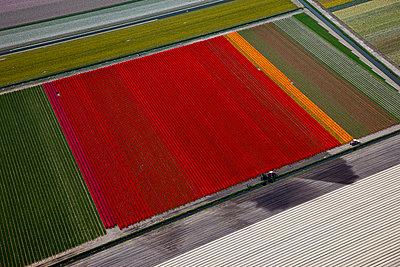 Flowerfield red - p1120m948343 by Siebe Swart