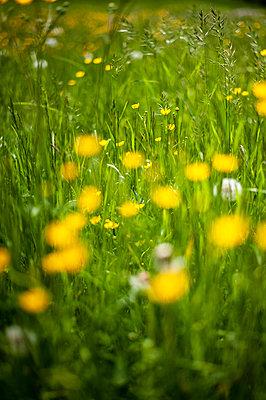 Summer meadow - p1466m2289426 by Stefanie Giesder