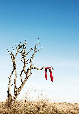 Der rote Schal - p1574m2145114 von manuela deigert