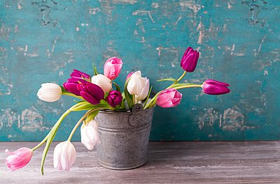 Tulips in a pail - p300m1356432 by Mandy Reschke