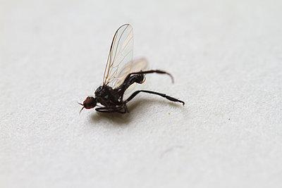 Fliege - p417m1040476 von Pat Meise