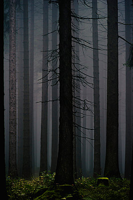 Forest - p1088m902214 by Martin Benner