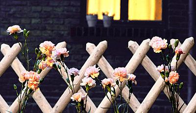 Gartenzaun mit Nelken - p2680457 von Christof Mattes