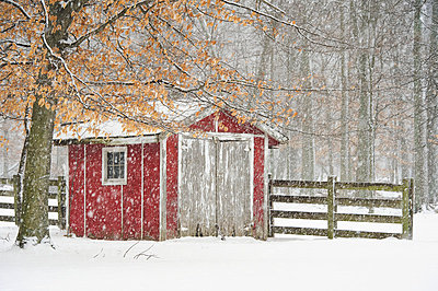 A red shed and wooden fence surrounded by trees in a snowfall; Ohio, United States of America - p442m837739f by Tom Patrick