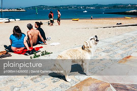 Bellender Hund am Strand - p1085m1426002 von David Carreno Hansen