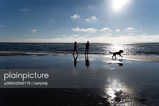 Young couple walking with their dog on the beach - p300m2042179 von harrylidy