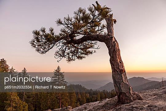 p651m2032334 von Richard T Nowitz