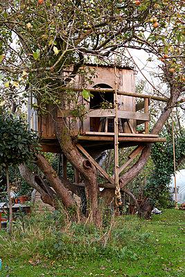 Treehouse in apple tree in Isle of Wight garden;  UK - p349m920025 by Rachel Whiting