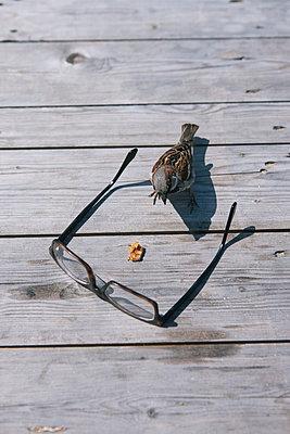 Eine Brille, ein Sperling und ein Futterbrocken - p586m962677 von Kniel Synnatzschke