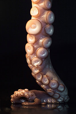 Close-up of fresh octopus tentacle on table against black background - p301m1180643 by Ralf Hiemisch
