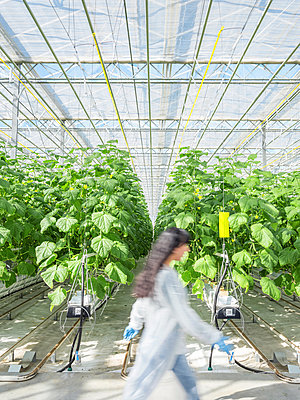 Greenhouse for the artificial and self-sufficient cultivation of vegetables - p390m2053568 by Frank Herfort