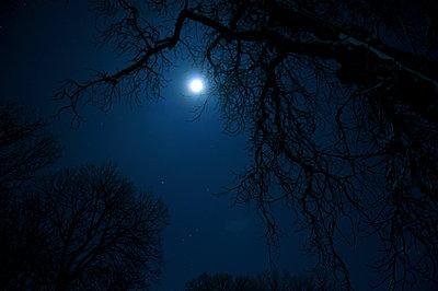 Vollmondnacht - p011m934322 von Daniela Podeus