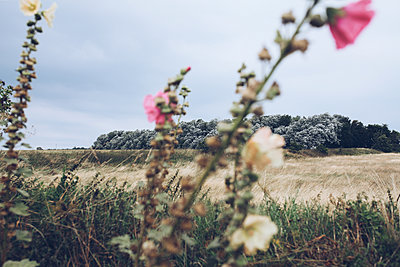 Wild flowers on the edge of the field - p1006m1425238 by Danel