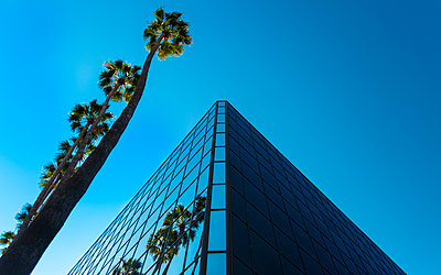 Palm trees and glass building, worm's-eye view, Hollywood, Los Angeles, California, United States of America, North America - p871m2022921 by Toms Auzins
