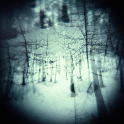 Schnee im Wald - p5679762 von Christophe Boete