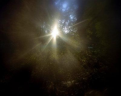 Divine - p945m715994 by aurelia frey