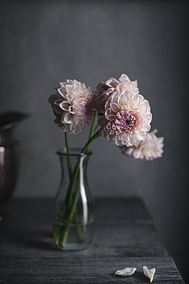 Pink dahlias in vase on table at home - p1166m1415176 by Cavan Images