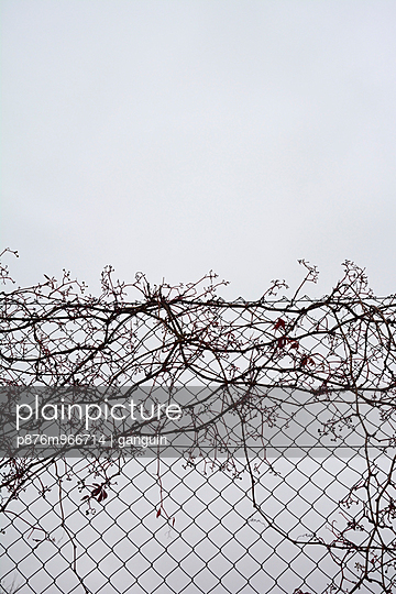 Chain-link fence - p876m966714 by ganguin