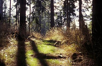 Moosiger Waldweg - p1870045 von Katarzyna Zommer