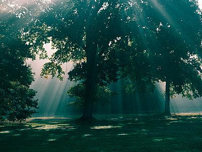 Park im Sonnenlicht - p551m2056704 von Kai Peters