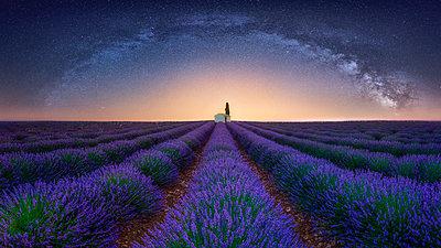 France, Alpes-de-Haute-Provence, Valensole, lavender field under milky way - p300m2023621 by Raul Podadera Sanz