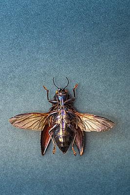 Dead beetle - p971m2275785 by Reilika Landen