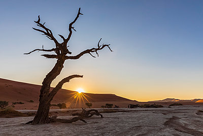 Africa, Namibia, Namib-Naukluft National Park, Deadvlei, dead acacia tree in clay pan - p300m2023642 von Fotofeeling