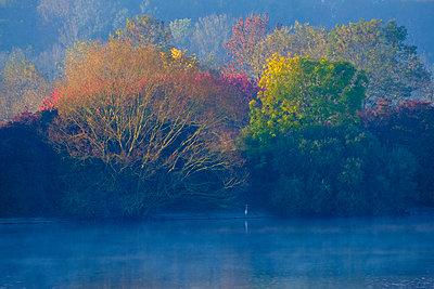 Germany, Bavaria, Ismaning reservoir, Pliening, morning mood with heron - p300m2083910 by Martin Siepmann