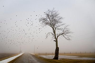 Birds - p395m1007818 by John Weber
