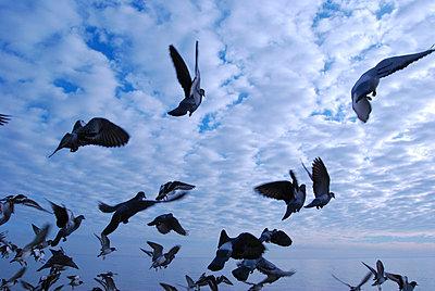 Tauben fliegen hoch - p1480202 von Axel Biewer